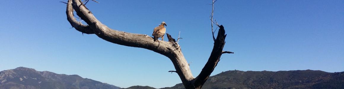 Le vautour